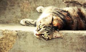 Little cat by Nefle
