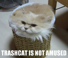 Trashcat by incinratis