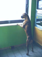 waiting... by katije2