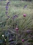 meadow by katije2