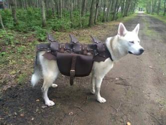 Dog armour by ArtisansdAzure