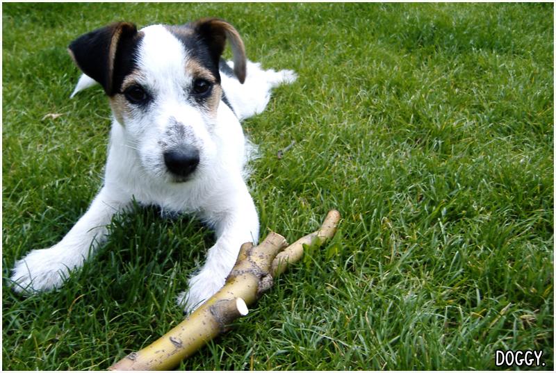 Doggy. by Boobel