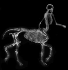 Centaur skeleton by x0negativezero0x