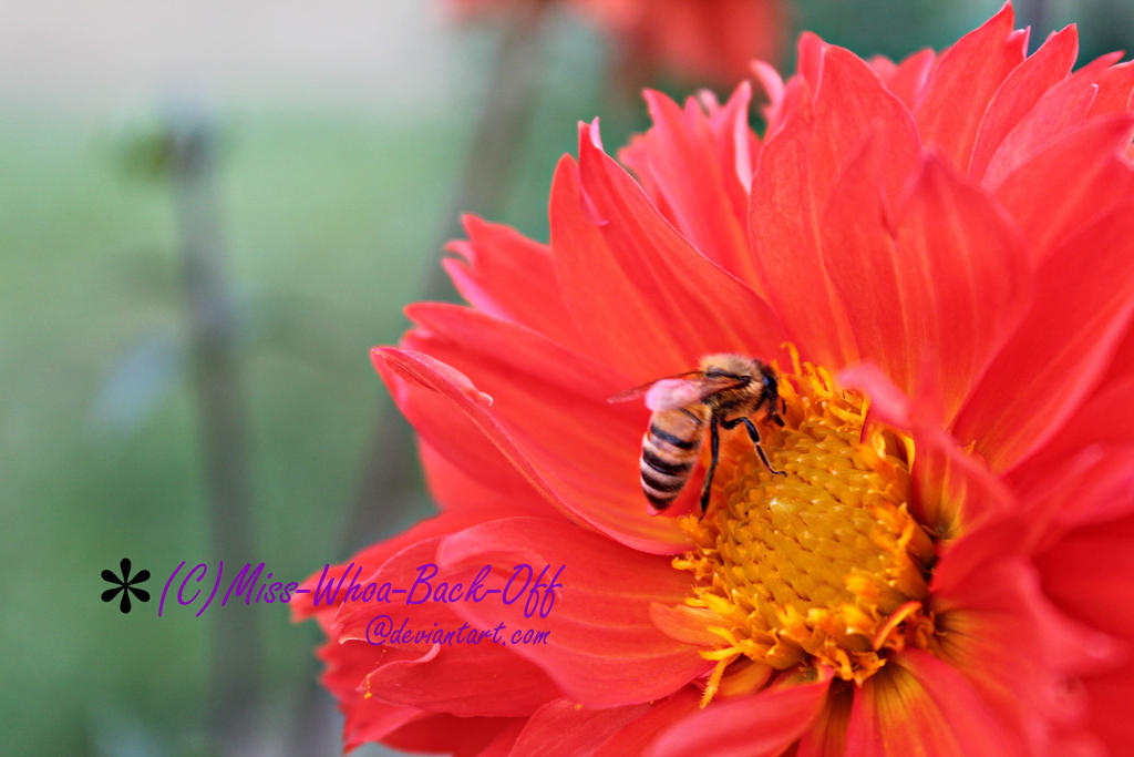 One of Nature's Pollinators by Miss-Whoa-Back-Off