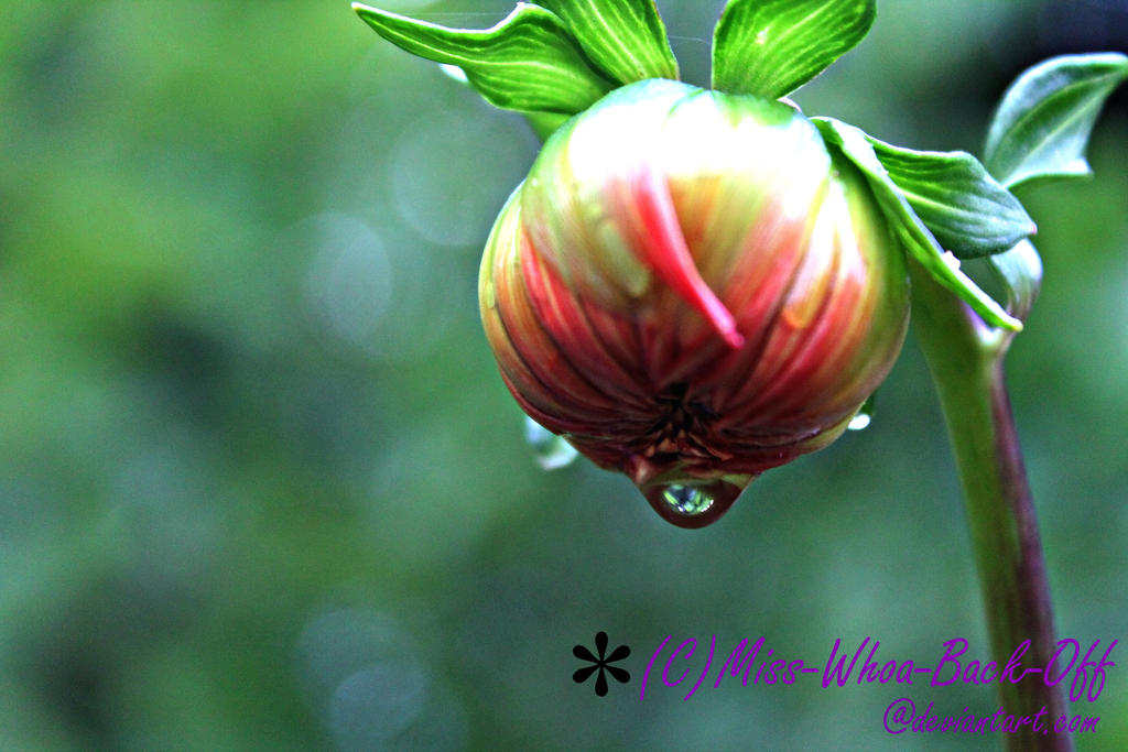 Raindrop by Miss-Whoa-Back-Off