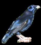 cut out bird