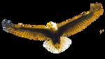 Cut Out Eagle