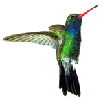 cut out Hummingbird