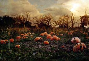 Haunted Pumpkin Patch