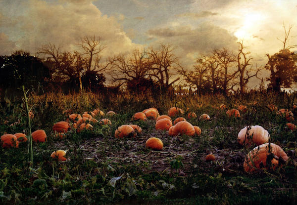 Haunted Pumpkin Patch by SolStock