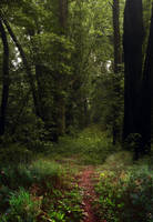 Wooded path by SolStock