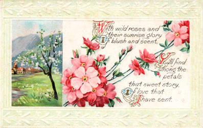 Rose Wild Greeting