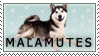 Malamute Stamp by Oceanbreeze103