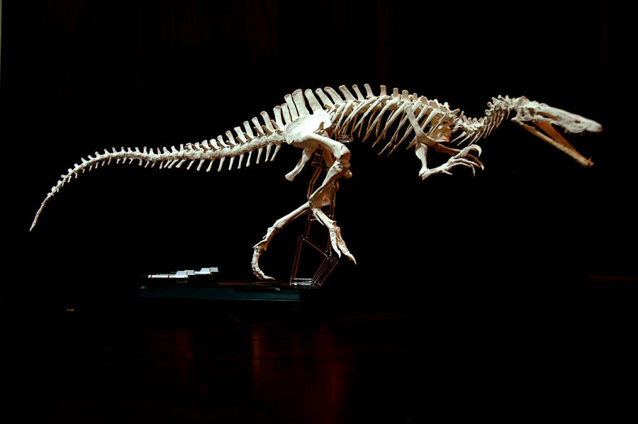 suchomimus skeleton1 by hannay1982