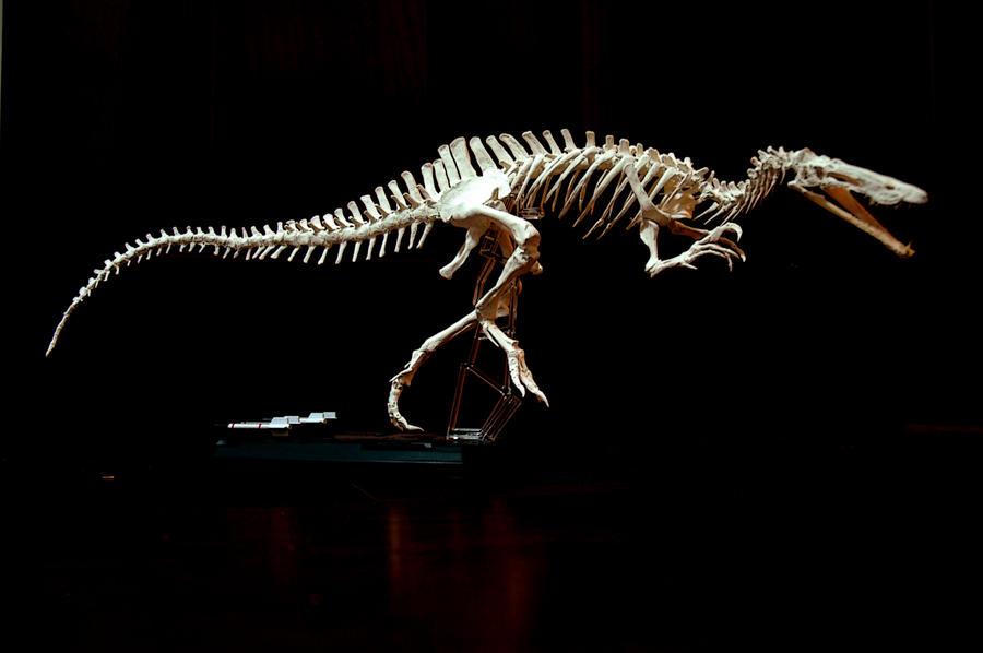 suchomimus skeleton1