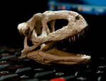aucasaurus garridoi skull