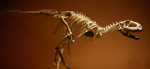 aucasaurus skeleton1