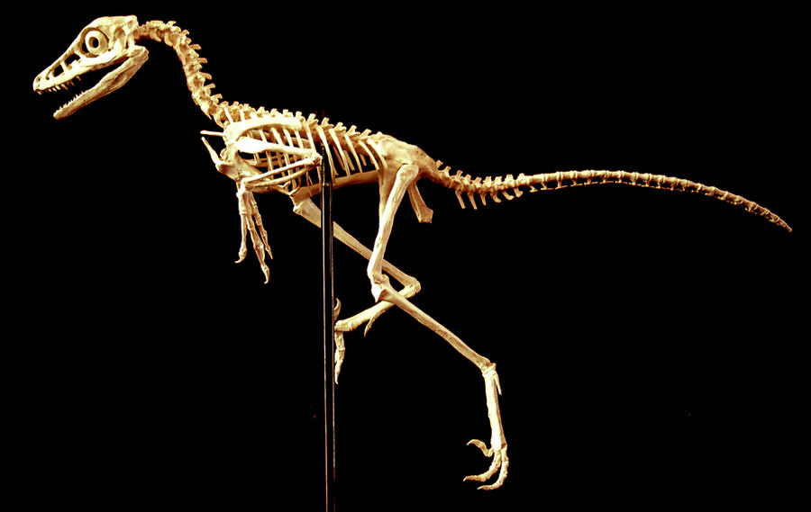 jinfengopteryx by hannay1982