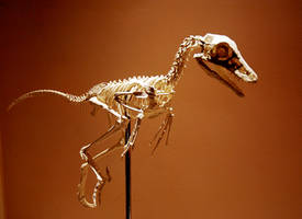 jinfengopteryx n1