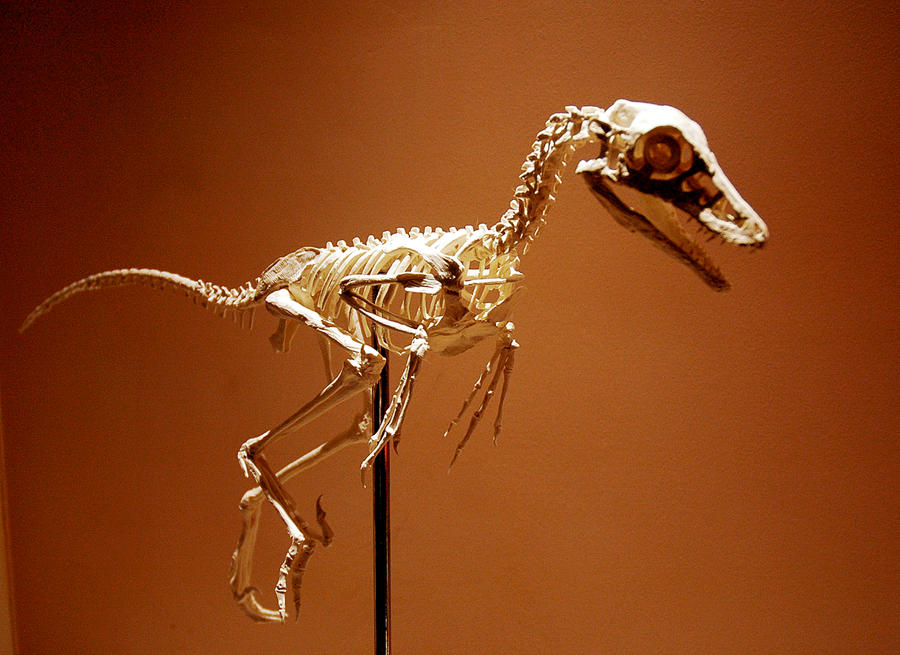 jinfengopteryx n1 by hannay1982