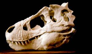 new tyrannosaurus skull