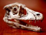 new material velociraptor