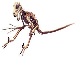 utahraptor skeleton by hannay1982