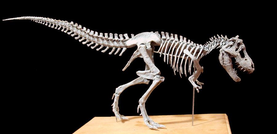 tyrannosaurus rex step14 by hannay1982