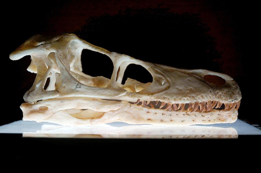 Workshop Program |Velociraptor Skull Front