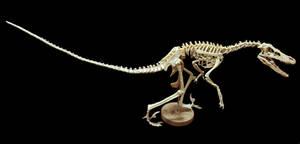 velociraptor step 17