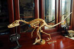 velociraptor step18