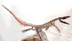 mosasaurs step8