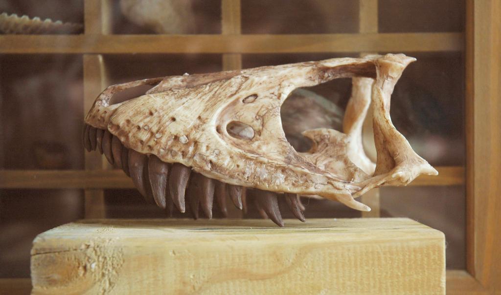 juvenile tyrannosaurus step2 by hannay1982