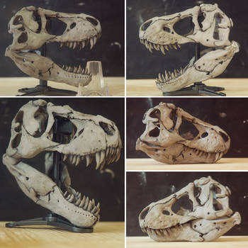 rex skull~