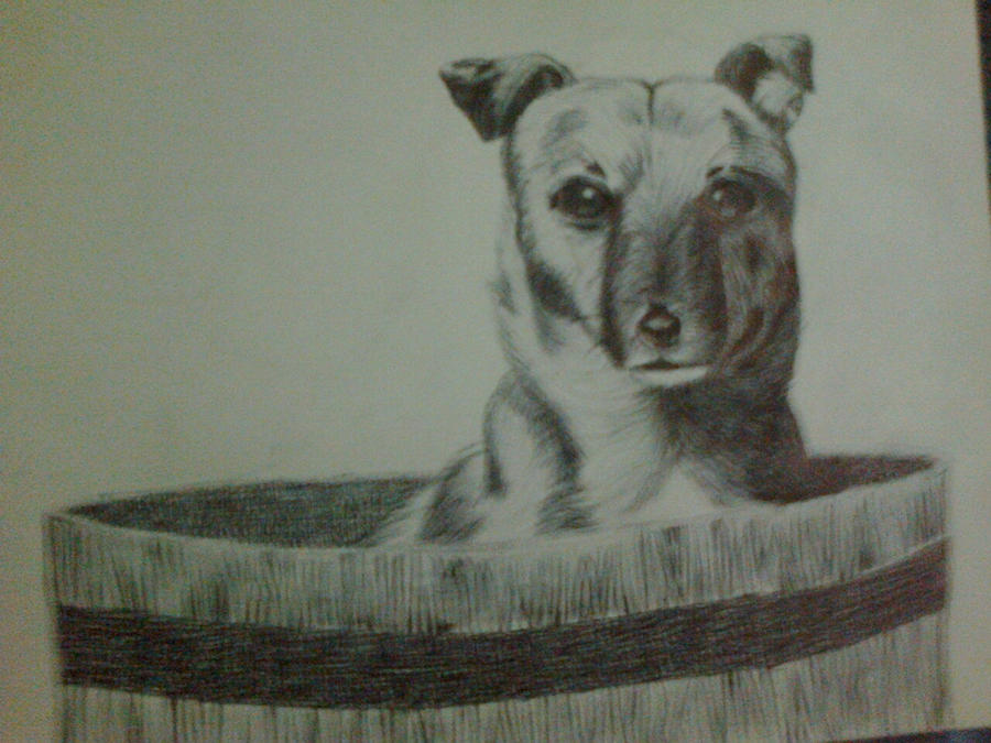 Dog by yel3