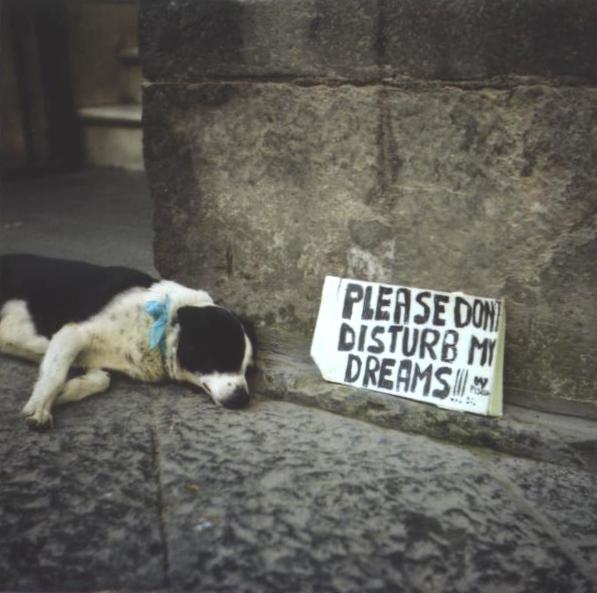 Sleepy pup by BirghtEyEz
