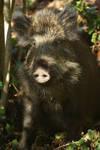 Sympatic Boar by eart3d