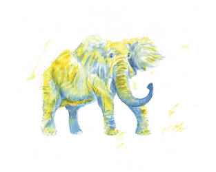 Elephant by shahuskies