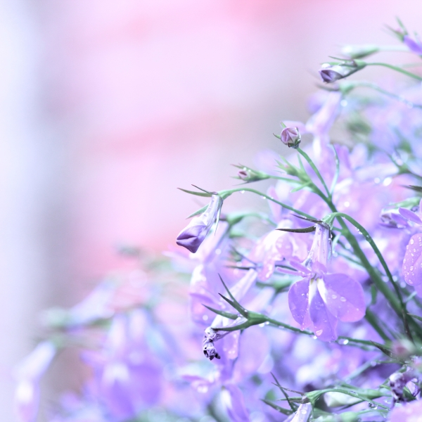 la petite fleur by Einsilbig