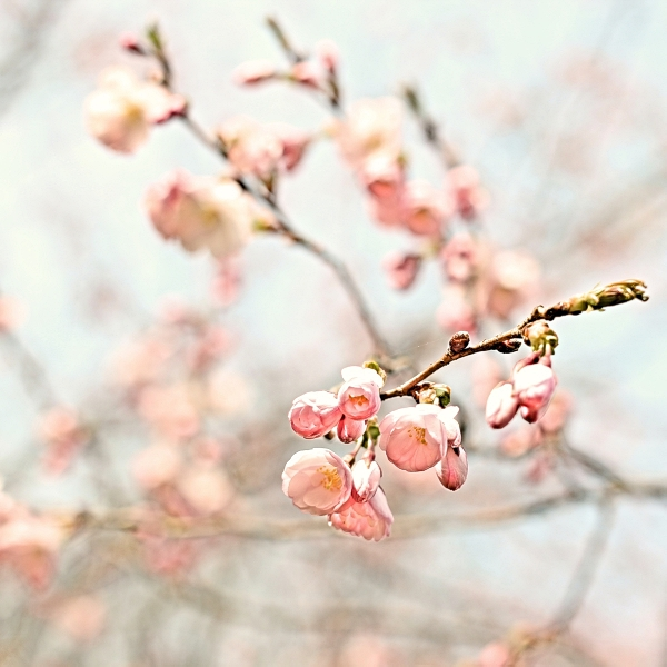 Spring by Einsilbig