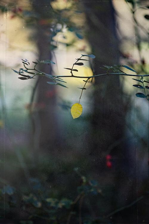 Grove of Mamre by Einsilbig