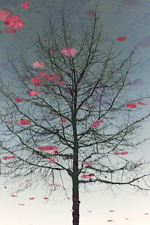 Floating Leaves by Einsilbig