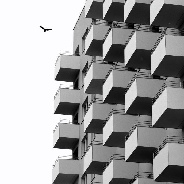 Free like a Bird by Einsilbig