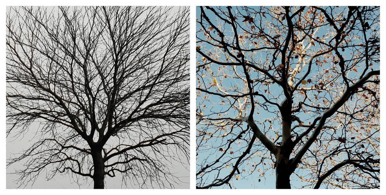 The Tree Twins (Dizygotic) by Einsilbig