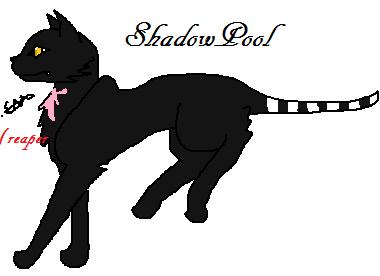 Shadowpool by Freyathewarriorcat