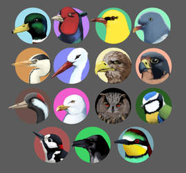 Some birds by MatiZ1994