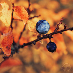 Autumno by eliska-olsanska