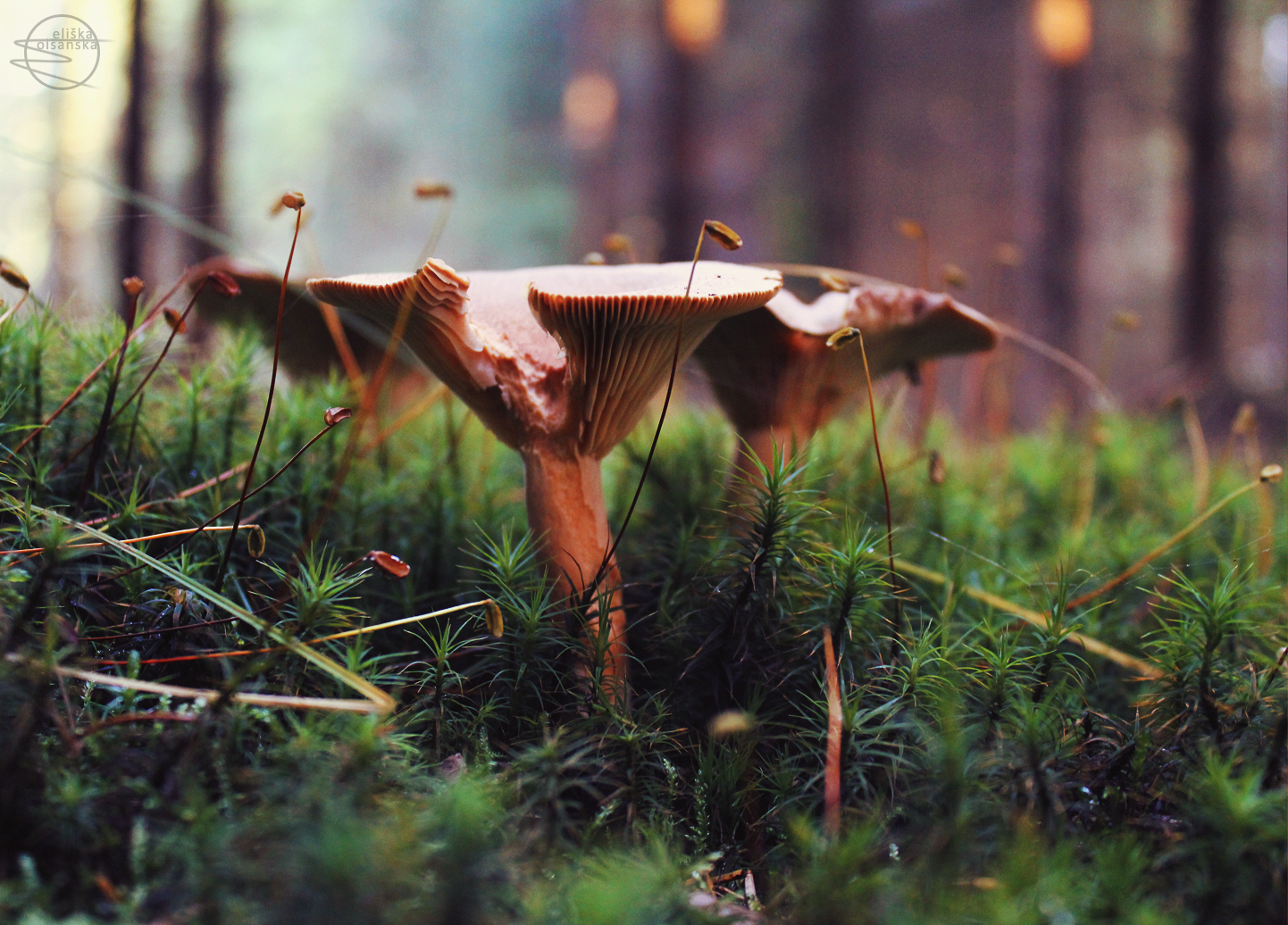 Fungi by eliska-olsanska