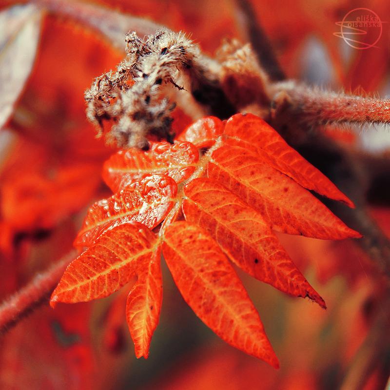 Autumnus flamma by eliska-olsanska