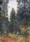 20201023 Autumn Forest